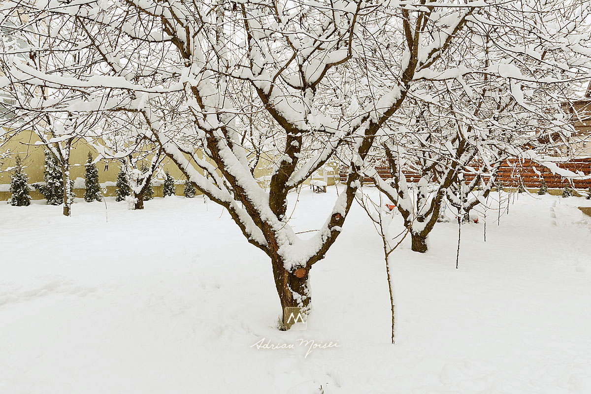 Peisaj de iarna la studioul fotograf Iasi Adrian Moisei