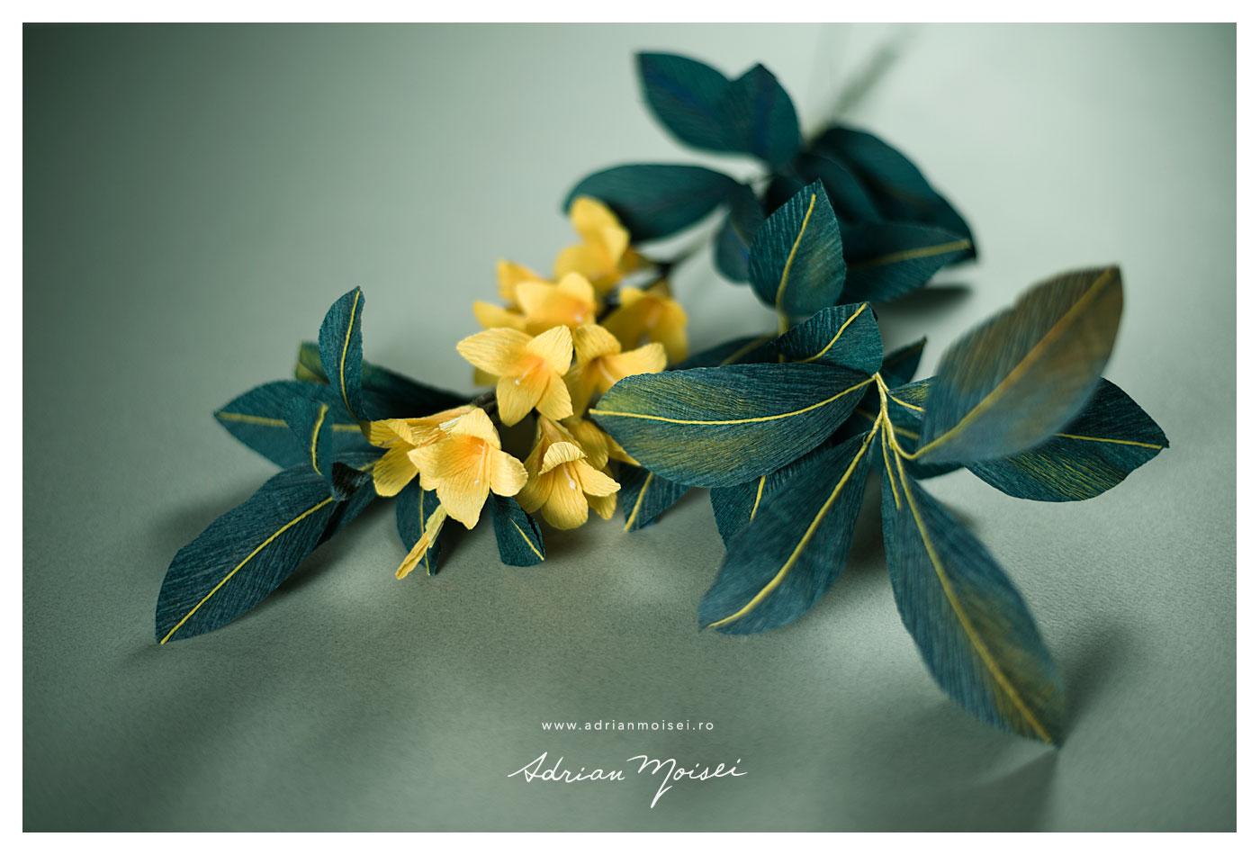 Fotografie de produs Iasi - flori de hartie - fotograf Iasi Adrian Moisei