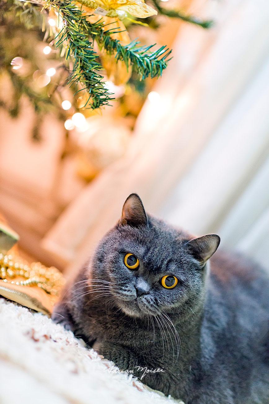 Sesiune de Craciun - Minisesiune de Crăciun în Iași, foto de familie, fotograf Adrian Moisei
